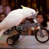 Шоу попугаев № 2
