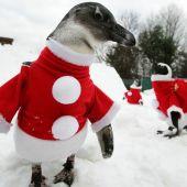 Шоу с пингвинами